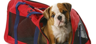 brown and white dog in red pet carrier