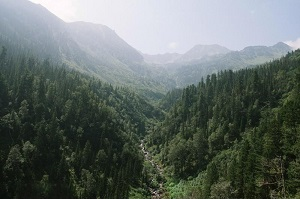 mountain vally with stream and evergreen trees